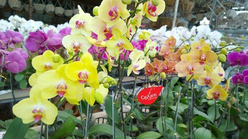 cây hoa lan 1