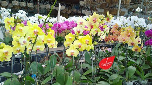cây hoa lan 2