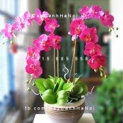cây hoa lan