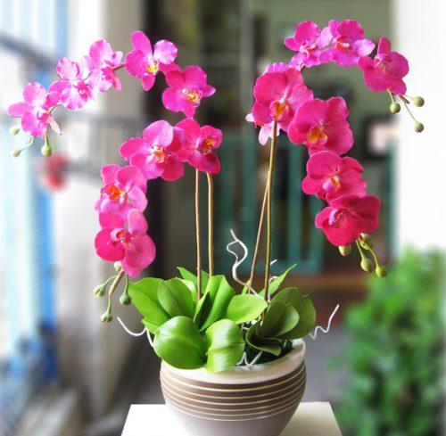 cây hoa lan 3