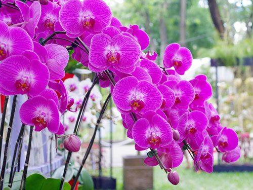 cây hoa lan 4