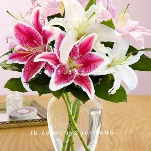 cây hoa lily 5